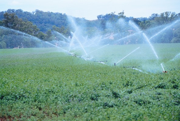 Irrigated Lucerne, Lachlan